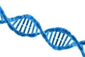Riverstudio - DNA e diritto d'autore